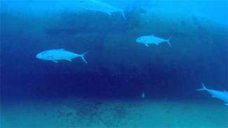 ocean wreck fishing montauk