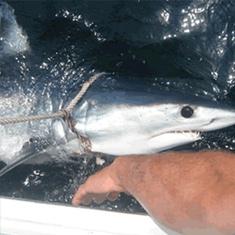 montauk shark charter boat